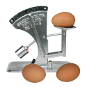 Image of an egg grading scale